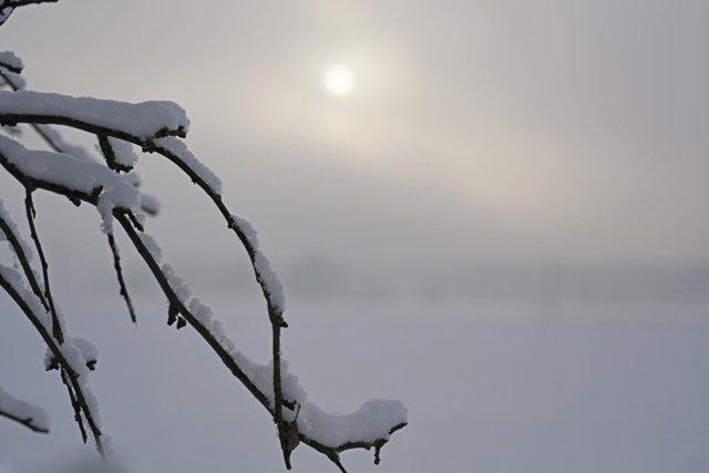 Neve su un ramo (Foto di repertorio master freedom/Shutterstock.com)