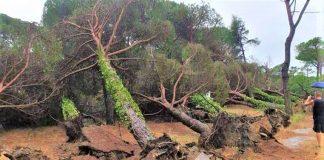 La pineta distrutta (foto di repertorio)