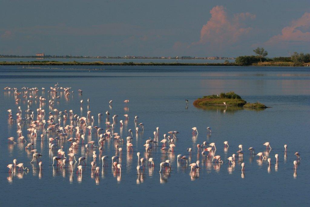 Fenicotteri rosa nel Parco del Delta del Po (foto di repertorio)