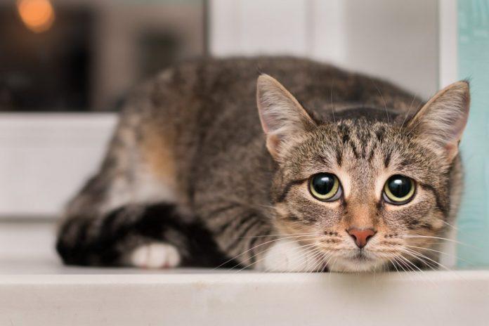 Gatto (foto di repertorio)