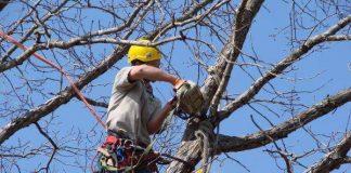 Operatore durante la potatura di un albero (foto di repertorio)