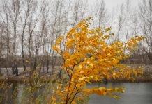 Rami dell'albero mossi dal vento (foto di repertorio shutterstock)