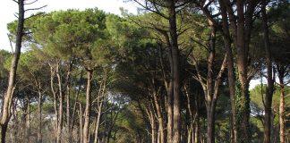 Pineta di Classe (Foto Nicola Strocchi, RavennaTourism)
