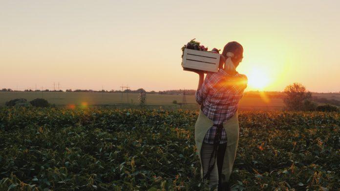 Agricoltura (foto di repertorio Shutterstock.com)