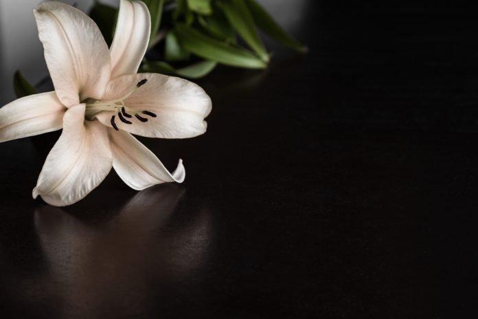 Giglio (foto di repertorio Shutterstock.com)
