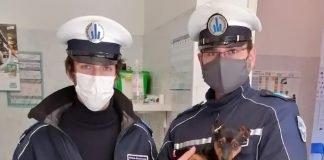 Gli agenti della Polizia Locale con il cucciolo di cane