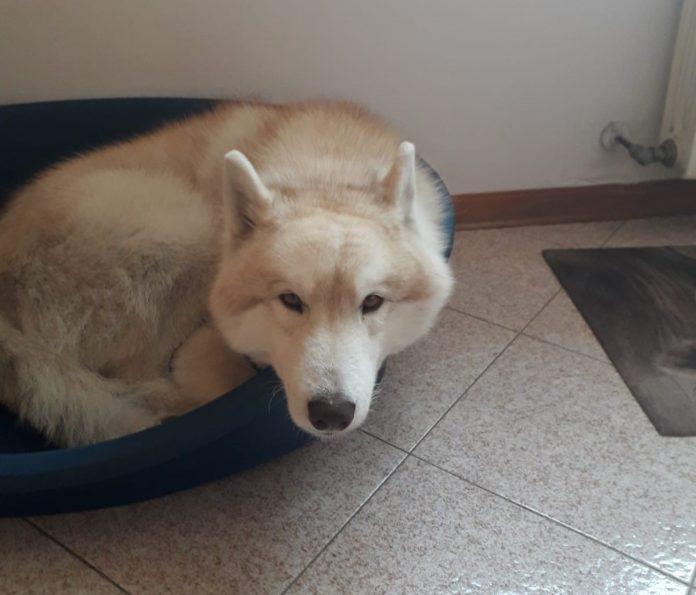 Il cane scomparso