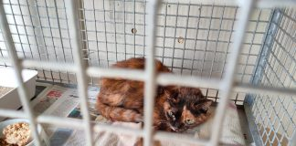 Uno dei gatti recuperati